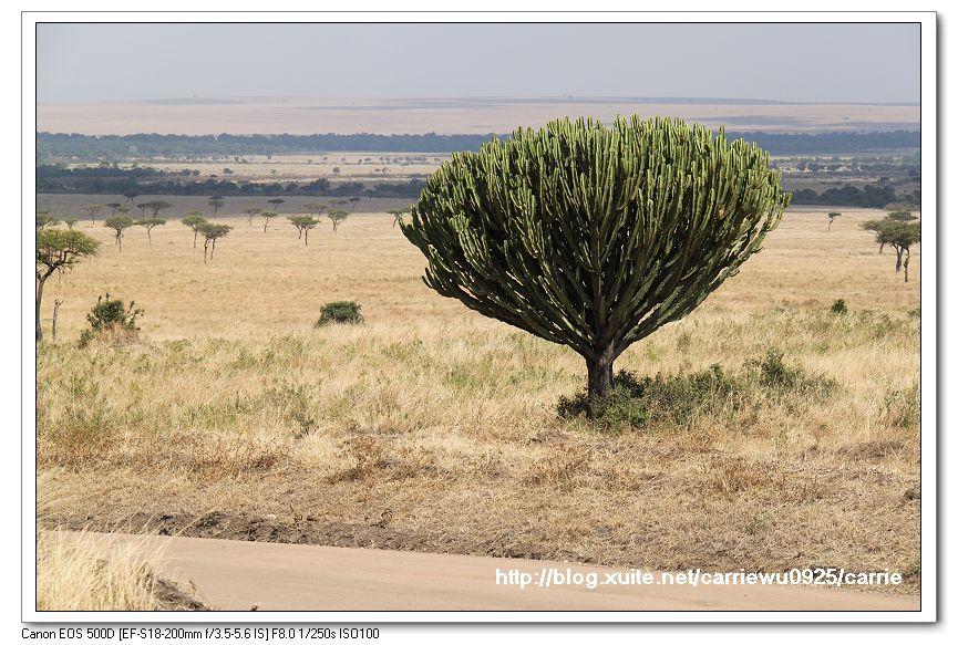 非洲肯亞2010/8:08IMG_7507.jpg