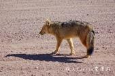 【玻利維亞旅遊】烏尤尼Uyuni天空之鏡三日團 Day2‧Salty Desert Aventour:39DSC00932.jpg