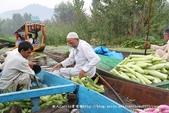 【喀什米爾Kashmir】印度India‧斯里那加Srinagar‧達爾湖Dal Lake~水上市場:IMG_0296.jpg