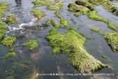 【新北市石門區】老梅綠石槽~季節限定的海濱美景:IMG_0695.jpg