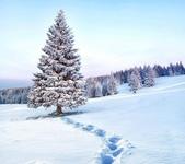 【喀什米爾Kashmir】喜馬拉雅Himalaya‧冬天的索馬Sonamarg:1488158_449850965138309_635189205_n.jpg