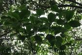【南投住宿】蟬說:鳳凰亭序~親子遊賞綠建築木屋‧生態導覽+瑜珈+螢火蟲+森林步道+雲海+櫻花‧霧屋玻: