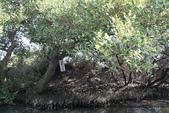 【台南】四草‧紅樹林綠色隧道~台江國家公園裡的台灣袖珍版亞馬遜河:17IMG_5725.jpg