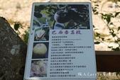 【南投埔里】紙教堂Paper Dome~來自日本的桃米生態村精神堡壘:IMG_0873.jpg