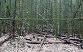 【新竹縣尖石鄉】司馬庫斯生態步道~在參天巨木間緩步品味泰雅智慧:15IMG_1030.jpg