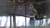 【台北士林】芝山文化生態綠園~在都會綠世界探索昆蟲大奧秘‧蝴蝶標本製作:P1610903.jpg
