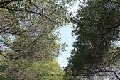 【台南】四草‧紅樹林綠色隧道~台江國家公園裡的台灣袖珍版亞馬遜河:20IMG_5733.jpg