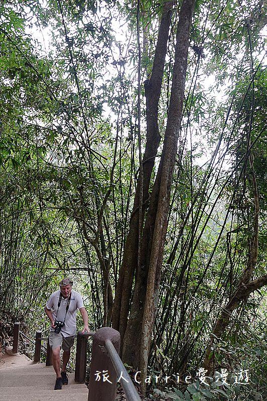 考艾國家公園/大山國家公園(Khao Yai National Park)~徜徉世界自然遺產,飽覽瀑:DSC06114.jpg