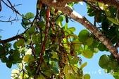 【古巴旅遊】千里達(Trinidad)安肯海灘(Playa Arcon)~這裡才是正宗加勒比海海灘!:08DSC01316.jpg