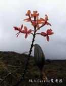 印加古道2天1夜‧Llama Path馬丘比丘私人嚮導團~挑戰連續8小時Inca Trail高強度健:32IMG_20180810_111012.jpg