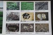 【新北市石門區】老梅綠石槽~季節限定的海濱美景:IMG_0635.jpg