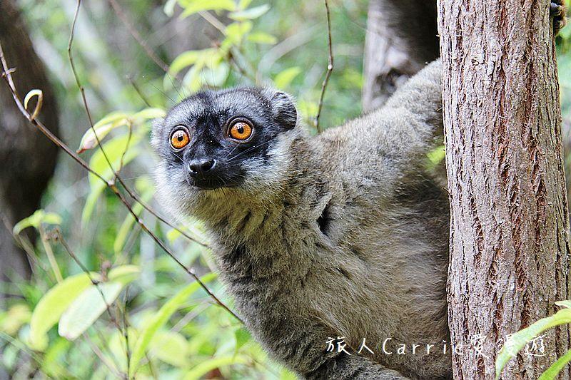 【旅遊講座】2017.01.15(日) Carrie主講 【動物天堂-馬達加斯加】-星球國際旅行社: