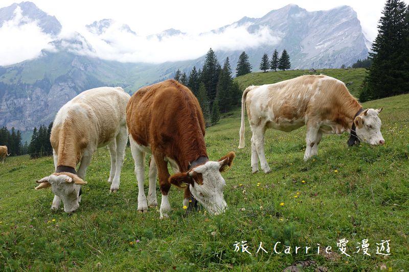 瑞士厄希嫩湖/ 歐能辛湖(Oeschinensee)~在世界自然遺產搭纜車玩滑梯健行趣【瑞士旅遊】:DSC07964.jpg