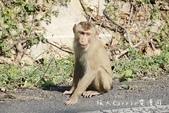 考艾國家公園/大山國家公園(Khao Yai National Park)~徜徉世界自然遺產,飽覽瀑:DSC05984.jpg