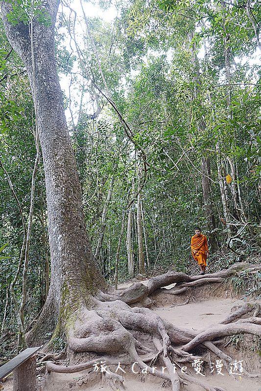 考艾國家公園/大山國家公園(Khao Yai National Park)~徜徉世界自然遺產,飽覽瀑:DSC06096.jpg