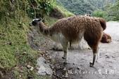 印加古道2天1夜‧Llama Path馬丘比丘私人嚮導團~挑戰連續8小時Inca Trail高強度健:50DSC05714.jpg