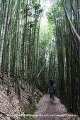 【新竹縣尖石鄉】司馬庫斯生態步道~在參天巨木間緩步品味泰雅智慧:05IMG_0998.jpg