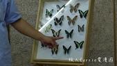 【台北士林】芝山文化生態綠園~在都會綠世界探索昆蟲大奧秘‧蝴蝶標本製作:P1610954.jpg