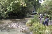 【紐西蘭New Zealand】為基督城Christchurch大地震默哀祈福‧追憶夢娜維爾花園Mo:15IMG_4359.jpg