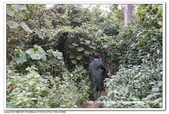 非洲肯亞2010/8:06IMG_4915.jpg