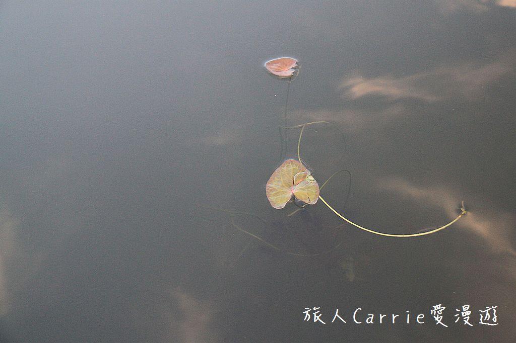 【南印喀拉拉】阿勒皮Alleppey~迴水區Backwater清晨盪小舟送明月迎朝陽:IMG_9175.jpg