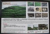 【新北市石門區】老梅綠石槽~季節限定的海濱美景:IMG_0638.jpg