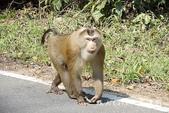 考艾國家公園/大山國家公園(Khao Yai National Park)~徜徉世界自然遺產,飽覽瀑:DSC05989.jpg