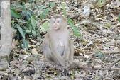 考艾國家公園/大山國家公園(Khao Yai National Park)~徜徉世界自然遺產,飽覽瀑:DSC06011.jpg