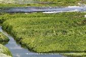 【新北市石門區】老梅綠石槽~季節限定的海濱美景:IMG_0698.jpg