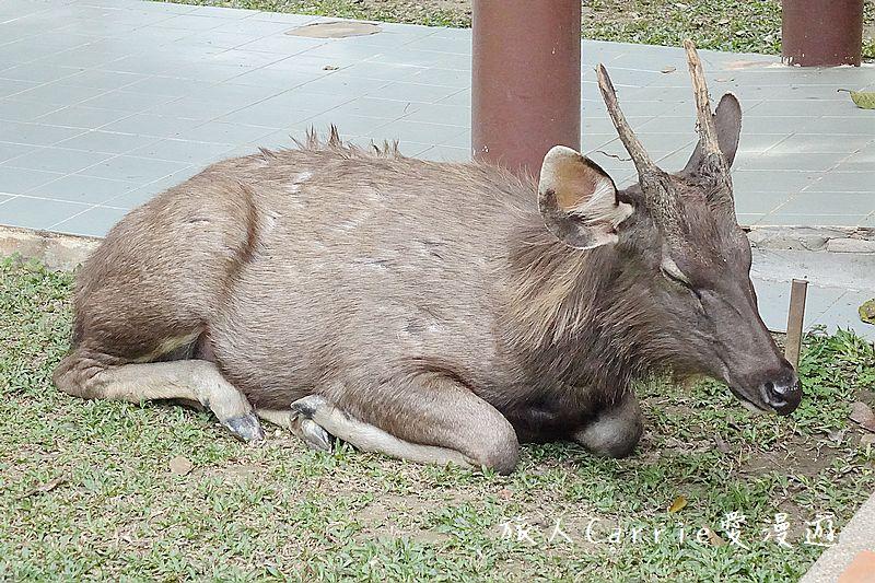 考艾國家公園/大山國家公園(Khao Yai National Park)~徜徉世界自然遺產,飽覽瀑:DSC06017.jpg