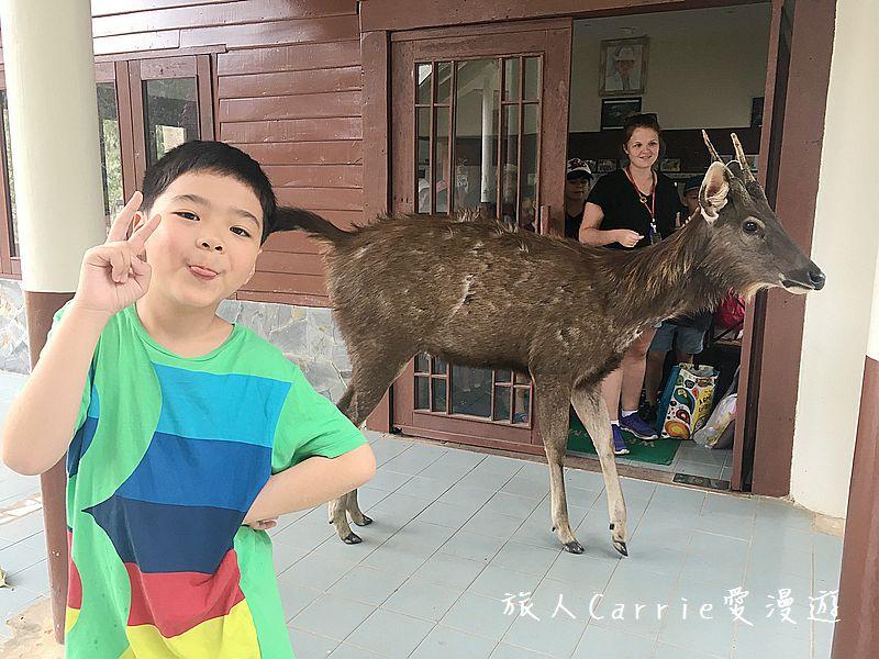 考艾國家公園/大山國家公園(Khao Yai National Park)~徜徉世界自然遺產,飽覽瀑:IMG_1991.jpg