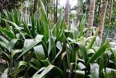 【嘉義旅遊】嘉義縣梅山鄉瑞峰太和休閒農業區~南天巨屏 竹坑溪步道 賴記咖啡莊園 海鼠山日出 賴坤陽的: