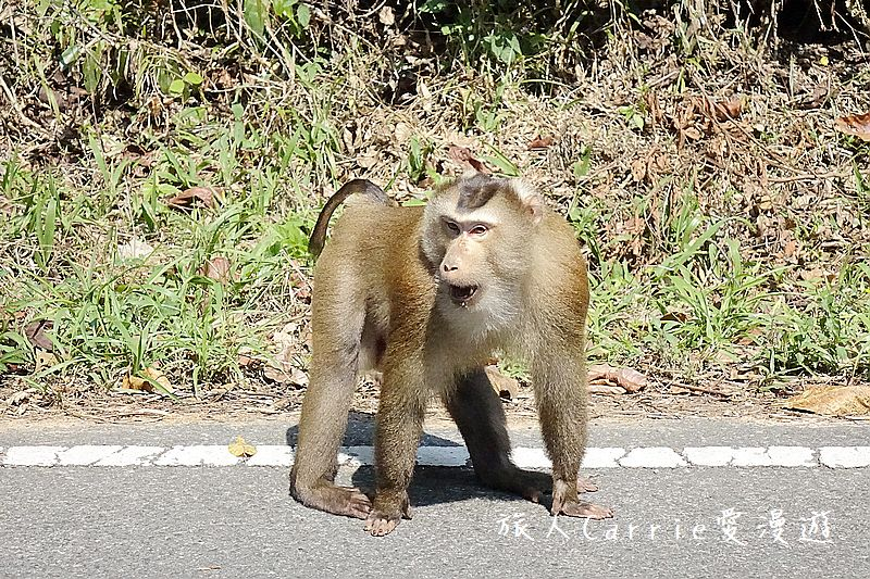 考艾國家公園/大山國家公園(Khao Yai National Park)~徜徉世界自然遺產,飽覽瀑:DSC05990.jpg