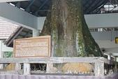 考艾國家公園/大山國家公園(Khao Yai National Park)~徜徉世界自然遺產,飽覽瀑:DSC06049.jpg