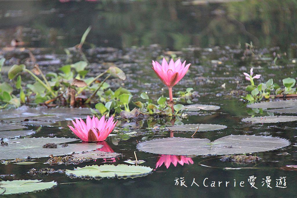 【南印喀拉拉】阿勒皮Alleppey~迴水區Backwater清晨盪小舟送明月迎朝陽:IMG_9288.jpg