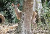 考艾國家公園/大山國家公園(Khao Yai National Park)~徜徉世界自然遺產,飽覽瀑:DSC06008.jpg