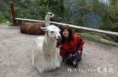 印加古道2天1夜‧Llama Path馬丘比丘私人嚮導團~挑戰連續8小時Inca Trail高強度健:50DSC05719.jpg