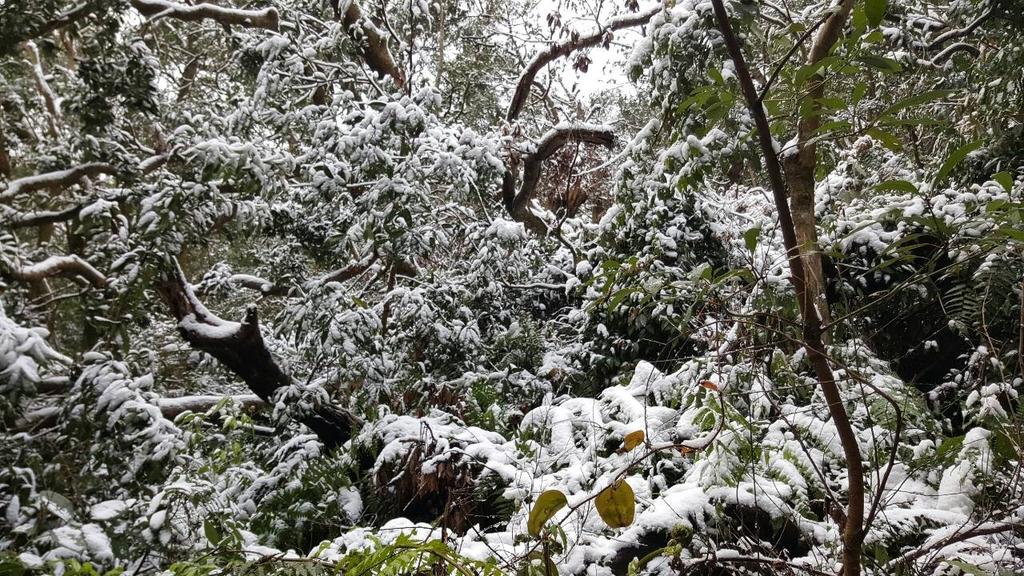 20160124(日)台灣歷經霸王寒流 連陽明山遊客中心都下雪了:
