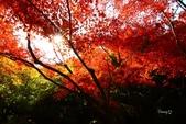 在大阪的第三天生活:日本大阪自由行第三天015.jpg