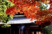 在大阪的第一天生活:日本大阪自由行第一天139.jpg