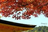 在大阪的第一天生活:日本大阪自由行第一天129.jpg
