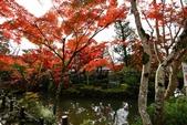 在大阪的第五天生活:日本大阪自由行第五天033.jpg