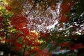 在大阪的第一天生活:日本大阪自由行第一天066.jpg