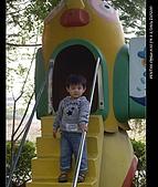 20081213大寮花海:nEO_IMG_IMGP3123.jpg