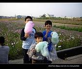 20081213大寮花海:nEO_IMG_IMGP3152.jpg