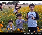 20081213大寮花海:nEO_IMG_IMGP3155.jpg