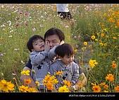 20081213大寮花海:nEO_IMG_IMGP3158.jpg