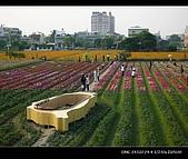 20081213大寮花海:nEO_IMG_P1000093.jpg