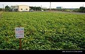 20081213大寮花海:nEO_IMG_P1000102.jpg