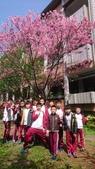 2018.3.22 校園櫻花開:dsc_7225_27077490318_o.jpg